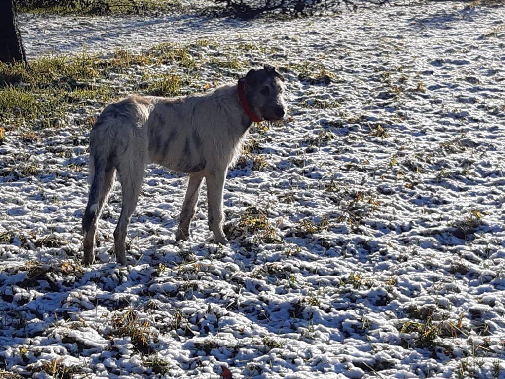 Rea und der Schnee