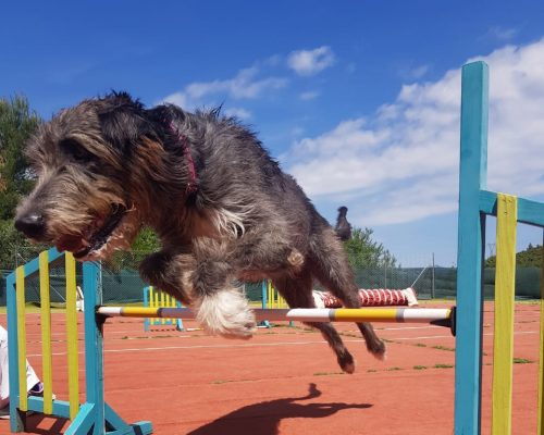 Wolfhound Agility in Griechenland